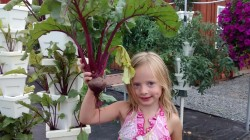 Loudounberry Farm Beet