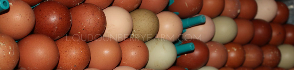 loudounberry-farm-eggs