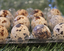 Loudounberry Farm & Garden Quail Eggs